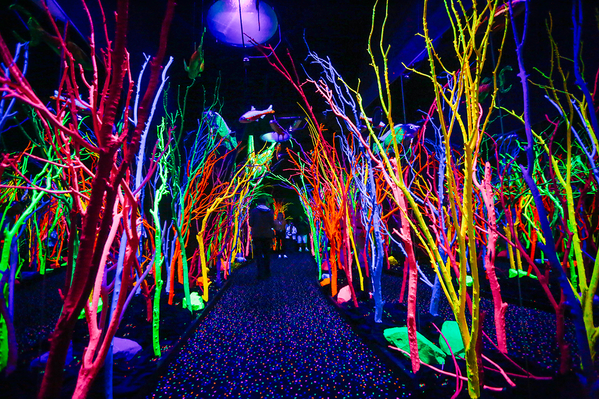 Haunted Forest at Meow Wolf