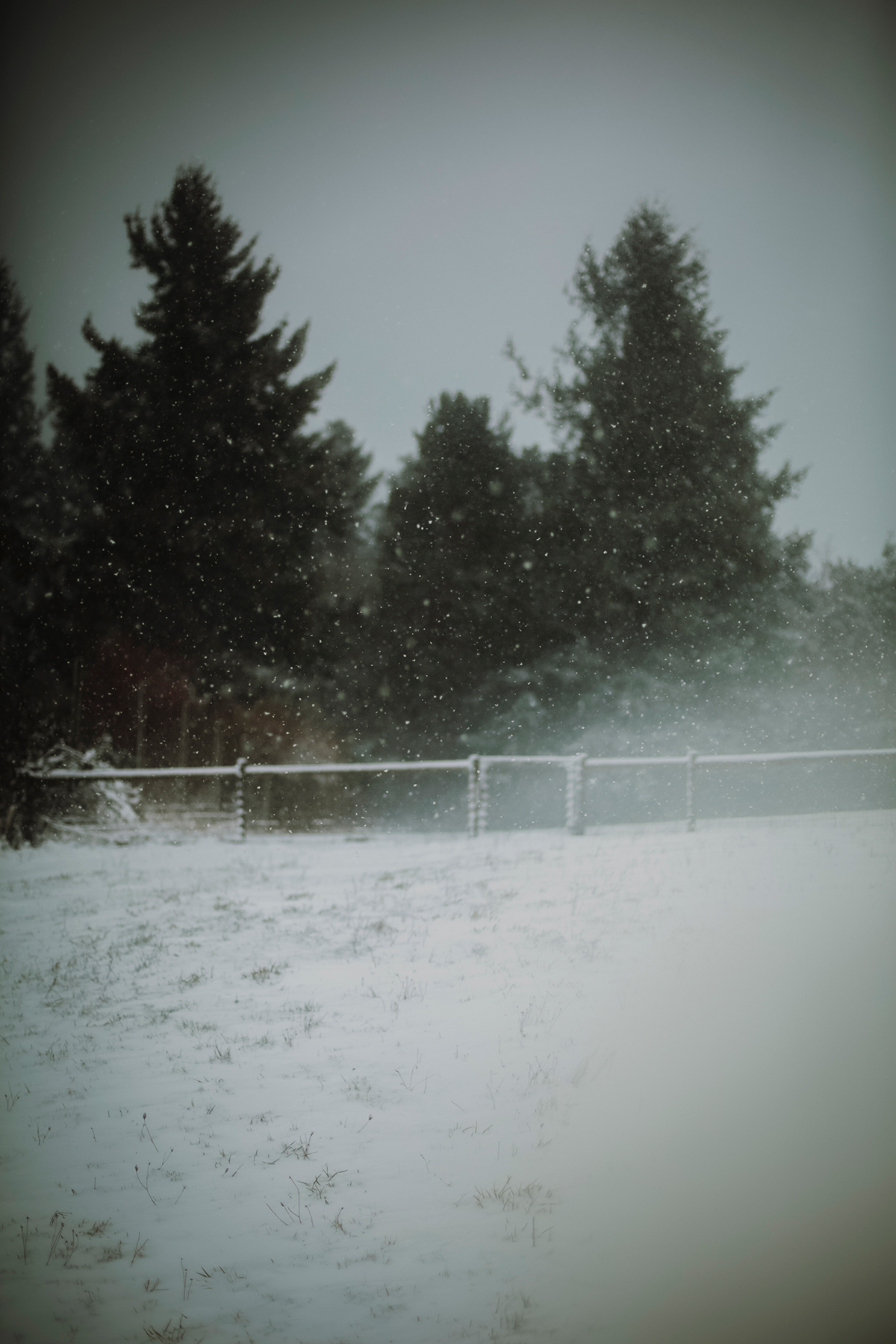 Snow on Vashon Island